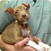 Adopt A Pet :: Mallory - URGENT FOSTER NEEDED - Seattle, WA
