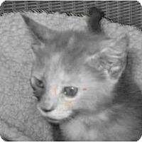 Adopt A Pet :: Autum - Catasauqua, PA