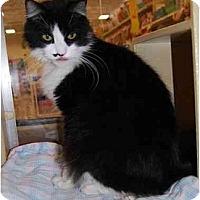Adopt A Pet :: Jonny - Modesto, CA