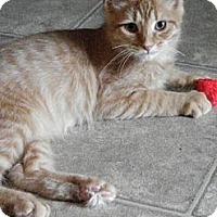 Adopt A Pet :: Springsteen - Grand Rapids, MI