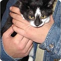 Adopt A Pet :: Cookie - Catasauqua, PA