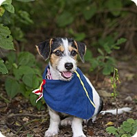 Adopt A Pet :: Teri - Calgary, AB