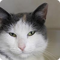 Adopt A Pet :: Niyelas - Chicago, IL