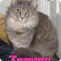 Adopt A Pet :: #3758 Tammy - Lawrenceburg, KY