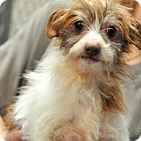 Adopt A Pet :: Eileen - Gadsden, AL