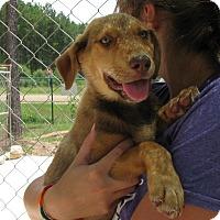 Adopt A Pet :: Bobbi Jean - Groton, MA