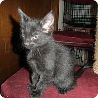 Adopt A Pet :: Ramses - Milwaukee, WI