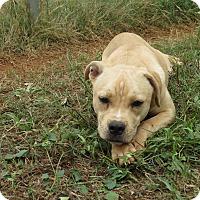 Adopt A Pet :: Angel - Marble Falls, TX