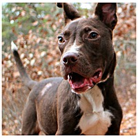 Adopt A Pet :: Bender - Forked River, NJ