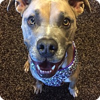 Adopt A Pet :: Kirby - Las Vegas, NV