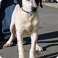 Adopt A Pet :: Homer - Beebe, AR
