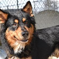 Adopt A Pet :: Furcules - Lemoore, CA