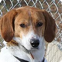 Adopt A Pet :: Buddy - Sylvania, GA