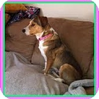Adopt A Pet :: Maizey Peaches In new England - Brattleboro, VT