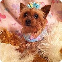 Adopt A Pet :: Moonlight Rose - Fremont, CA