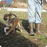 Adopt A Pet :: Cinderella - Allentown, PA