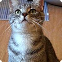 Adopt A Pet :: Reesie - Escondido, CA