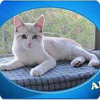 Adopt A Pet :: Alex - Encinitas, CA