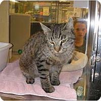 Adopt A Pet :: Olivia - Woodstock, GA