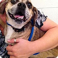 Adopt A Pet :: Brandie - Cleveland, OH