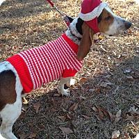Adopt A Pet :: Nicholas - Columbia, SC