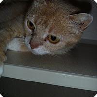 Adopt A Pet :: Dusty - Hamburg, NY