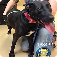 Adopt A Pet :: Anna - Boston, MA