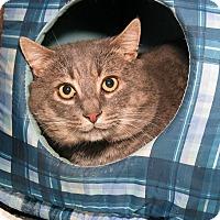 Adopt A Pet :: Maxwell - Milford, MA