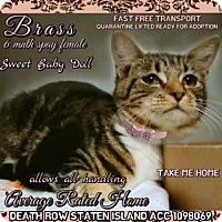 Adopt A Pet :: Briana - Monroe, NY