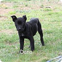 Adopt A Pet :: Dana - Hayes, VA