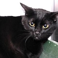 Adopt A Pet :: Hunter - Canoga Park, CA