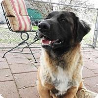 Adopt A Pet :: Rugby - Waco, TX
