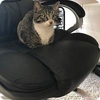 Adopt A Pet :: Miner - Stafford, VA