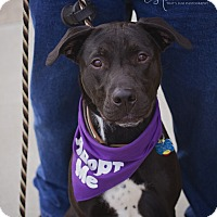 Adopt A Pet :: Axel - Springfield, MO