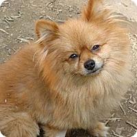 Adopt A Pet :: Alfie - Afton, TN
