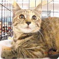 Adopt A Pet :: Colleen - Riverside, RI