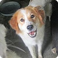 Adopt A Pet :: Connie - Alexandria, VA