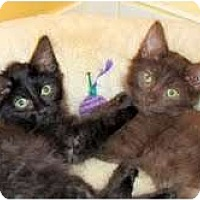 Adopt A Pet :: Trinity & Truffle - Arlington, VA