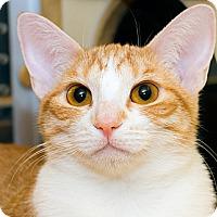 Adopt A Pet :: Scarlett - Irvine, CA