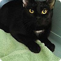 Adopt A Pet :: Princess Leia - Willington, CT