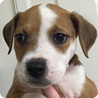 Adopt A Pet :: Calypso#01M - Orlando, FL