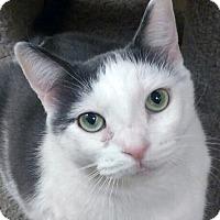 Adopt A Pet :: Luha - Irvine, CA