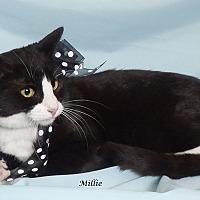 Adopt A Pet :: Millie - Kerrville, TX