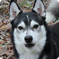 Adopt A Pet :: Striker - Hagerstown, MD