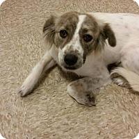 Adopt A Pet :: Lorena - Glendale, AZ