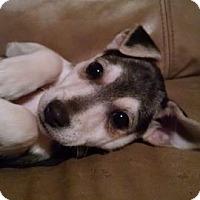 Adopt A Pet :: Leah - Great Falls, VA