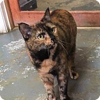 Adopt A Pet :: Capri - Goshen, NY