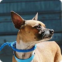 Adopt A Pet :: CASH - Las Vegas, NV