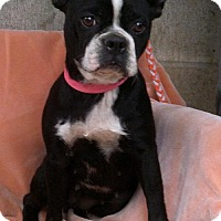 Adopt A Pet :: BETSY BOSTON - WOODSFIELD, OH