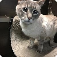 Adopt A Pet :: Dizzy - Winchester, CA